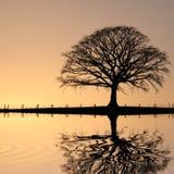 Árbol de roble en la puesta del sol Fotografía de archivo