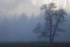Árbol de roble en niebla Fotos de archivo libres de regalías