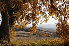 Árbol de roble grande en otoño Foto de archivo