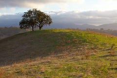 Árbol de roble idílico en luz del sol de la tarde Imagen de archivo
