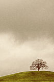 Árbol de roble solitario Imagen de archivo libre de regalías