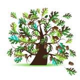 Árbol de roble, verano Imagen de archivo libre de regalías