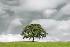 Árbol de roble y nubes de tormenta imagenes de archivo