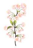 Árbol de Sakura Imagenes de archivo