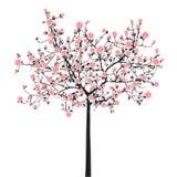Árbol de Sakura de la plena floración Fotos de archivo libres de regalías