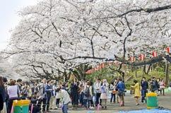 Árbol de Sakura en el parque de Ueno fotos de archivo