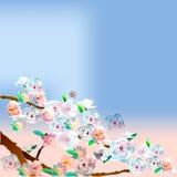 Árbol de Sakura por la tarde Imagen de archivo libre de regalías