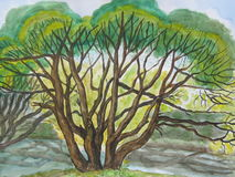 Árbol de sauce cerca del resorte. Imágenes de archivo libres de regalías