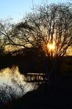 Árbol de sauce sobre un lago Foto de archivo libre de regalías