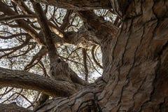 Árbol de Solated en Segovia, España Foto de archivo