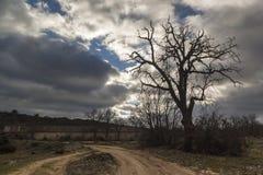 Árbol de Solated en Segovia, España Foto de archivo libre de regalías