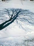 Árbol de sombra del invierno imágenes de archivo libres de regalías