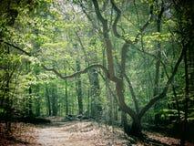 Árbol de Sourwood Fotos de archivo libres de regalías