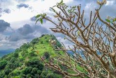 Árbol de templo y la colina Fotos de archivo libres de regalías