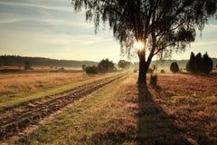 Árbol de tierra del camino y de abedul en luz del sol de la mañana Foto de archivo libre de regalías