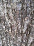 Árbol de tierra trasero Imagen de archivo libre de regalías