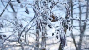 Árbol de tilo congelado de las ramas en la nieve en un paisaje de la naturaleza del invierno del cielo azul Fotografía de archivo libre de regalías