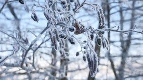 Árbol de tilo congelado de las ramas en la nieve en un paisaje de la naturaleza del invierno del cielo azul Foto de archivo