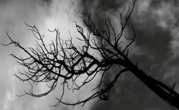 Árbol de Tim BurtonFoto de archivo libre de regalías