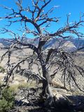 Árbol de Utah de la vida Fotos de archivo libres de regalías