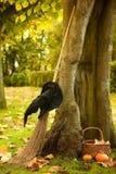 Árbol de Víspera de Todos los Santos de una bruja Fotos de archivo