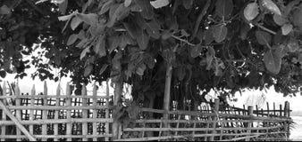 Árbol de Wat en modo blanco y negro imágenes de archivo libres de regalías
