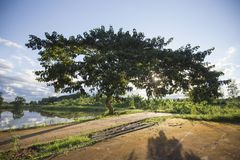 Árbol debajo de la sombra del sol Fotos de archivo libres de regalías