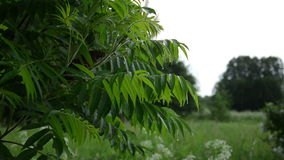 Árbol decorativo del jardín en la lluvia almacen de video