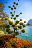 Árbol decorativo hermoso imagenes de archivo