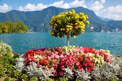 Árbol decorativo hermoso fotos de archivo libres de regalías