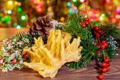 árbol del Año Nuevo de los akotis y fondo de la Feliz Navidad Fotografía de archivo libre de regalías
