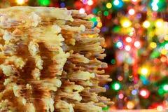 árbol del Año Nuevo de los akotis y fondo de la Feliz Navidad Fotografía de archivo