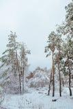 Árbol del Año Nuevo en invierno hermoso del bosque del invierno Fotos de archivo