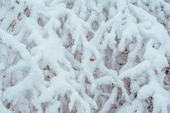 Árbol del Año Nuevo en invierno hermoso del bosque del invierno Fotografía de archivo