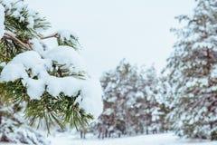 Árbol del Año Nuevo en invierno hermoso del bosque del invierno Foto de archivo