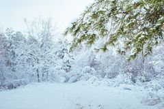Árbol del Año Nuevo en invierno hermoso del bosque del invierno Imagen de archivo libre de regalías