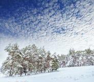 Árbol del Año Nuevo en invierno hermoso del bosque del invierno Imagenes de archivo
