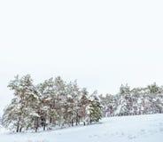 Árbol del Año Nuevo en invierno hermoso del bosque del invierno Imagen de archivo