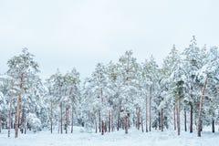Árbol del Año Nuevo en invierno hermoso del bosque del invierno Fotos de archivo libres de regalías