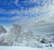 Árbol del Año Nuevo en invierno hermoso del bosque del invierno Foto de archivo libre de regalías