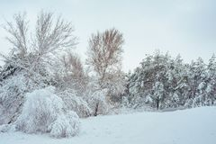 Árbol del Año Nuevo en invierno hermoso del bosque del invierno Imágenes de archivo libres de regalías