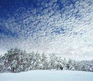Árbol del Año Nuevo en invierno hermoso del bosque del invierno Fotografía de archivo libre de regalías