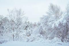 Árbol del Año Nuevo en paisaje hermoso del invierno del bosque del invierno con los árboles nevados Árboles cubiertos con escarch Imagen de archivo