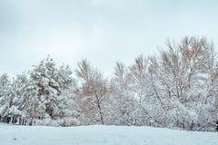 Árbol del Año Nuevo en paisaje hermoso del invierno del bosque del invierno con los árboles nevados Árboles cubiertos con escarch Foto de archivo libre de regalías