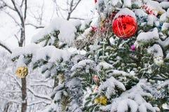 Árbol del Año Nuevo en parque bajo nieve. Imagenes de archivo