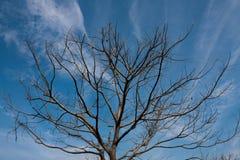 Árbol del abandono Imagen de archivo libre de regalías