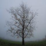 Árbol del alfarero Imagen de archivo libre de regalías
