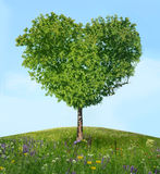 Árbol del amor Imagenes de archivo