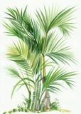 Árbol del bambú de la palma Imagen de archivo