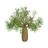 árbol del baobab de la representación 3D en blanco Imágenes de archivo libres de regalías